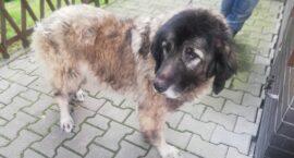 Zabrany pies z ul. Józefa Poniatowskiego