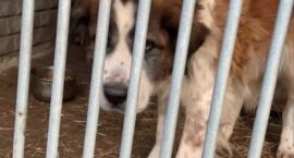 Piekarscy społecznicy pomogli bezdomnym zwierzętom
